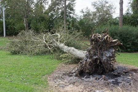 Emergency tree removal service in Jacksonville