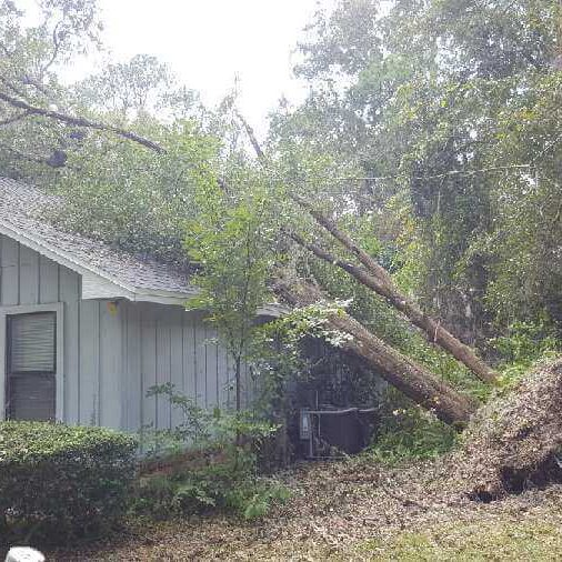 Emergency tree service in Jacksonville