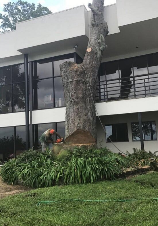 Tree removal service in Jacksonville