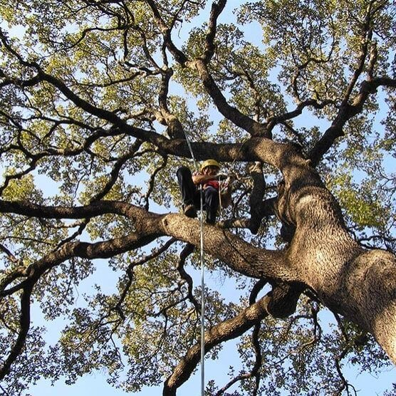 tree trimming service in Jacksonville
